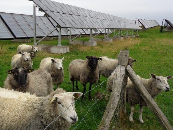Zero Carbon lawn mowers for the district solar hot water plant